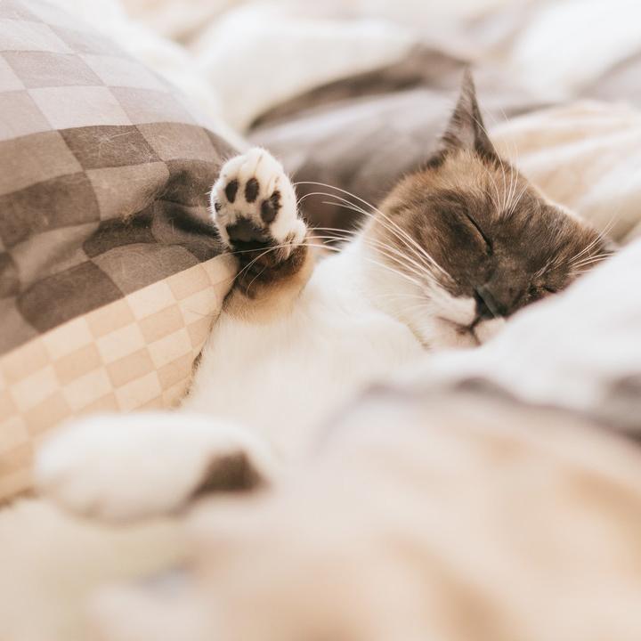 自分にあった睡眠時間を取ろう